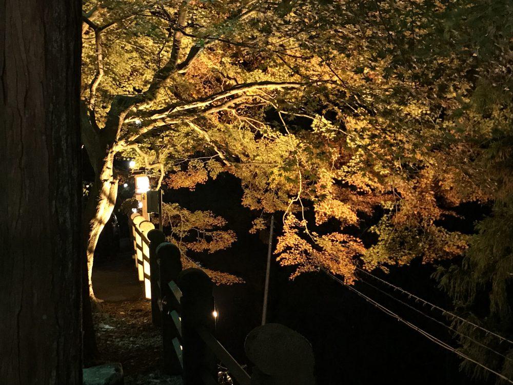 湯之島館,下呂温泉,紅葉,ライトアップ